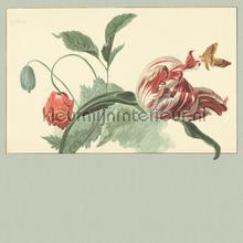 Tulip and Poppy sage