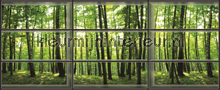View through window on forest