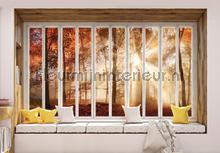Autumn forest seen through window