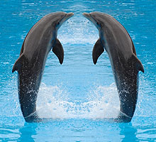 dolfijnen small