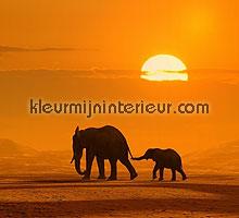 olifant in de zon