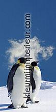 pinguins rechts