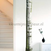 interieursticker home tree 7