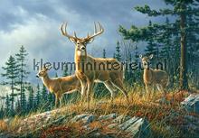 Autumn Whitetails fotobehang Ideal Decor dieren