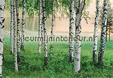Nordic forest fotobehang Ideal Decor Bossen