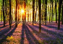 Woodland at Dawn fotobehang Ideal Decor Bossen