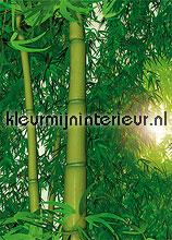 Bamboo fotobehang Papermoon Bossen