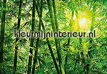 Bamboo forest fotobehang Ideal Decor Bossen