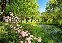 Park in the Spring fotobehang Ideal Decor Bloemen Planten
