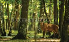 Red deer fotobehang Kleurmijninterieur dieren