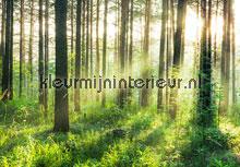Sunset in the woods fotobehang Ideal Decor Bossen