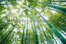 Bamboo forest fotobehang Kleurmijninterieur Bossen