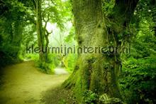 Magic forest fotobehang Kleurmijninterieur Bossen