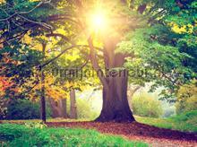 Sunny tree fotobehang AG Design Bossen
