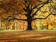 Autumn tree fotobehang AG Design Bossen