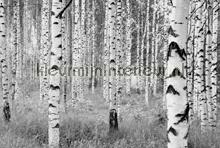 Woods fotobehang Komar zwart wit